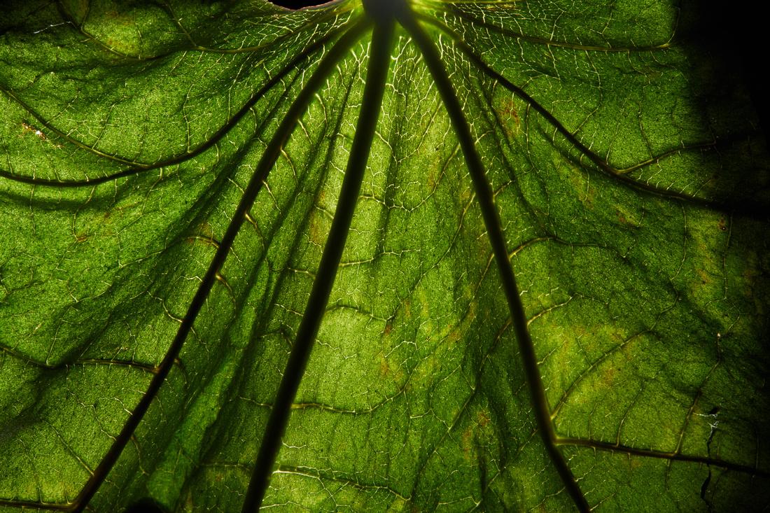 Grean Leaf from de buurt